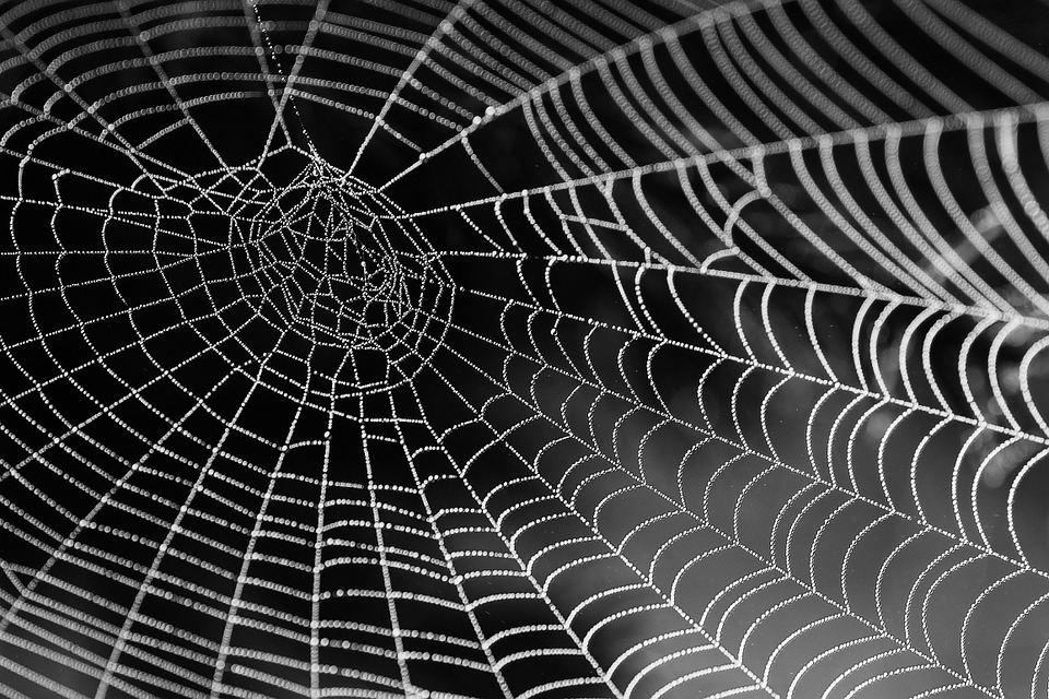 Fascia Network/Spider Web