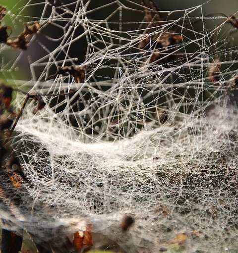 Fascia Network/Messy Spider Web